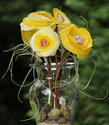 Yellow/Cream Peonies with Copper Stems